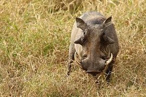 An African Safari