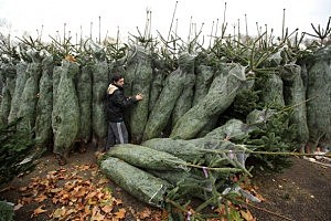 Christmas Tree Sellers In London
