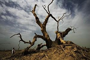 Dead Poplar Woods In Desert