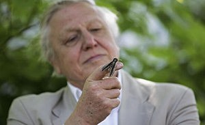 Sir David Attenborough Launches National Moth Recording Scheme at london Zoo