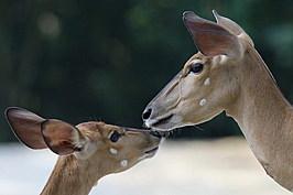 Singapore Zoo Celebrates Its 40th Anniversary