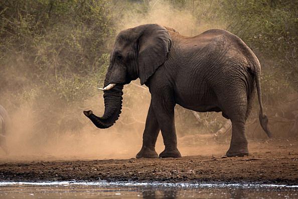 Wildlife In Kruger National Park