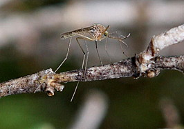 Bay Area Vector Control Team Investigates West Nile Mosquito Presence