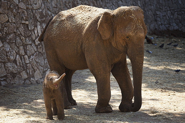 New Born Elephants Appear At The Safari Zoo In Israel