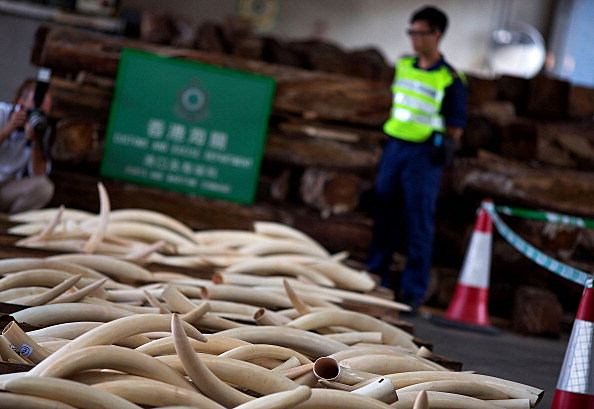 Hong Kong Customs Seize Endangered Species Cargo