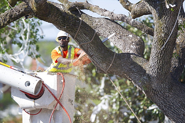 Auburn Oaks Tree Removal, amallo
