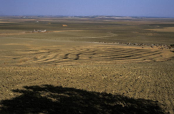 Seville. Cereals plain near Carmona.