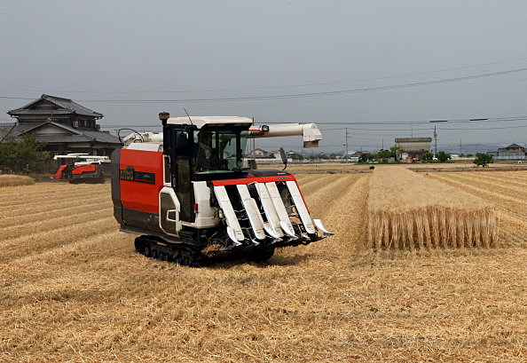 Wheat Harvesting Season Begins In Japan