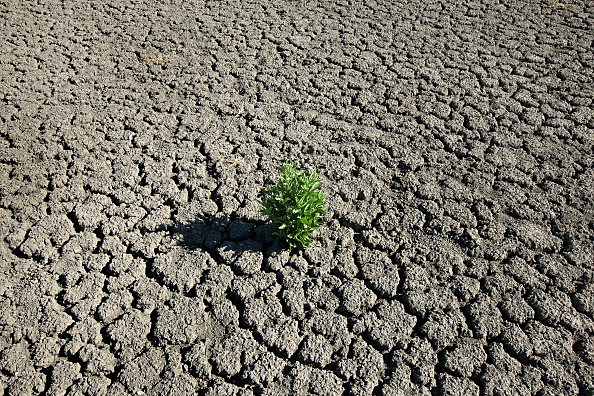 Farmers, Ranchers Struggle As Texas Endures Historic Drought