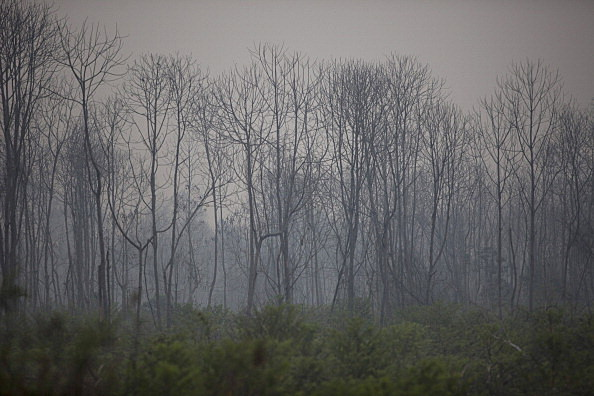 Indonesia Declares State Of Emergency As Riau Haze Worsens
